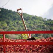 nicaragua-producer