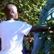 senegaleses-trabalham-na-colheita-de-cafe-em-nova-resende-800-x-450-800x445